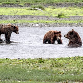 Alaska 2017-27